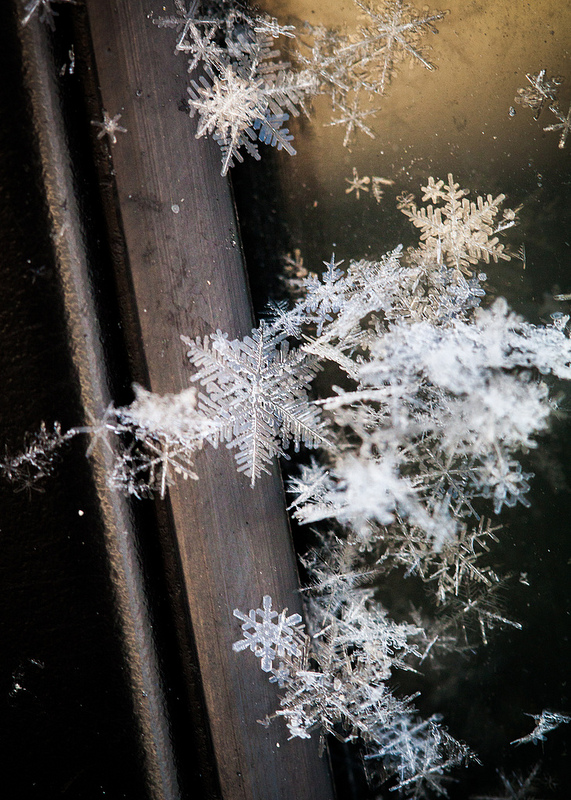 Snowflakes (photo by Willow Arlen)