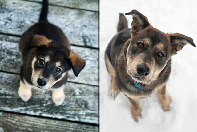Before and After - 6 Months of Puppyhood